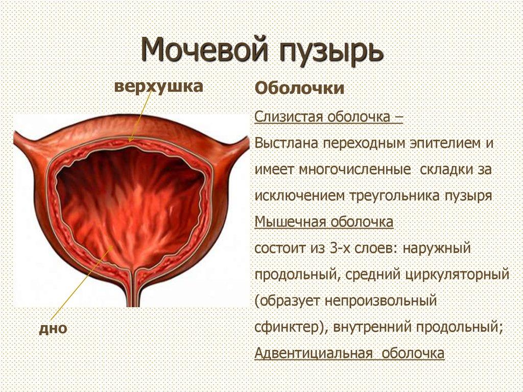 Рези в мочевом пузыре у женщин причины 1